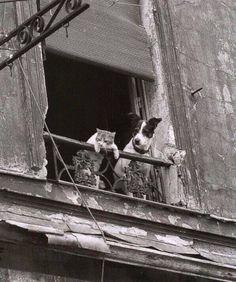 Vieux couple de parisiens en 1960