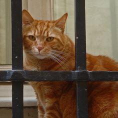 #Tom Cat  Like,Repin,Share, Thanks!