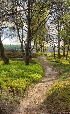 A Stroll In Springtime On De Posbank In The Netherlands by Tim Abeln Photography and Digital Art Prints. Beautiful wall decoration for your home and office. Just a small path leading to the heath on 'de Posbank', a national park in the Netherlands. This area is exceptionally beautiful in spring and autumn because of the many colors. This path seemed like nothing special, but... #wallart #walldecor #interiordesign #art #landscape #holland #veluwe