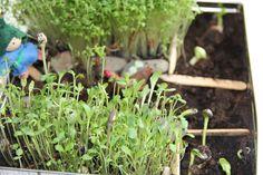 Familienjahr: Unser Mini-Garten