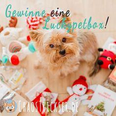 Gewinnspiel! Wir dürften die #Luckypetbox für Weihnachten testen und dürfen euch nun eine Verlosen!  Alles zum Gewinnspiel gibt es bei uns im Blog! www.ChaosTrickser.de (Link in der Bio!) Schaut einfach mal vorbei und macht mit. Wir freuen uns wenn viele mitmachen denn wir finden die @Luckypetbox einfach toll! #bestwoof #a_dogsworld #barkbox #dogscorner #dog_features #dogsofinstagram @dogsofinstagram #excellent_dogs @excellent_dogs @animals.co #hundeblog #hundeblogger #hundefotografie…