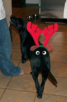 funny christmas pictures (26)
