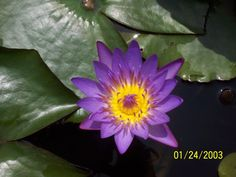 Purple flower, Hawaii Purple Flowers, Beautiful Things, Hawaii, Random, Plants, Flowers, Flora, Plant, Planting