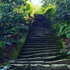 【shuugo8866】さんのInstagramをピンしています。 《瑞泉寺に向かう階段 #鎌倉#湘南#瑞泉寺#階段#静寂#森#写真撮ってる人と繋がりたい#写真好きな人と繋がりたい#ファインダー越しの私の世界 #photo#temple#green#forest#fall#winter#silence#camera#like4like#likeforlike#like4follow》