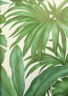 Tapeta liście, palmy, bananowca, bananowiec, palma, dżungla, botaniczna Versace 2 HOME