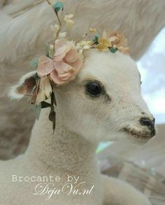 Barn Animals, Cute Animals, Lamas, Baa Baa Black Sheep, Baby Lamb, Little Bo Peep, Counting Sheep, Lord Is My Shepherd, Sheep And Lamb