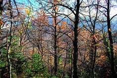 Helmos mt. forest #outdoorsgr