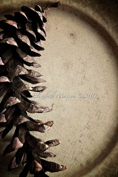pinecone on antique plate