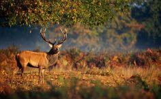 3840x2370 deer 4k new wallpaper hd