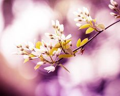 floral photography plum nature photography botanical 8x10 8x12 fine art photography flower spring photography blossom plum wall art pastel