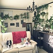 On Walls,ダイソー,雑貨,100均,DIY,一人暮らしに関連する他の写真