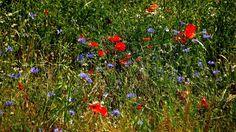 Zum Reinlegen, oder?  ....  Sommerwiese vom Feinsten. Wünsche allen hier einen sonnigen Mittwoch. :-)