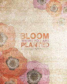Bloom Where You Are Planted NEW, gorgeous colors & inspirational quote