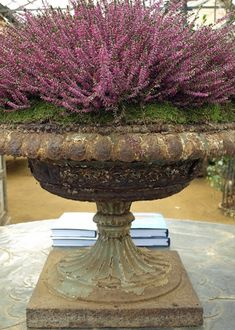 Fresh Blooms: Heather Garden Urn with Heather and Moss Garden Urns, Garden Ornaments, Urn Planters, Beautiful Flowers, Dream Garden, Garden Inspiration, Flowers, Garden Pots, Garden Containers