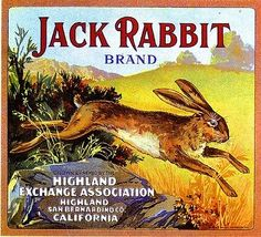 Highland Jack Rabbit Orange Citrus Crate Label Art Print - Easter Fruit Crate Label Art Prints - Holiday Fruit Crate Label Art Prints - Fruit and Vegetable Crate Label Art Prints Vintage Labels, Vintage Ads, Vintage Posters, Art Posters, Vintage Ephemera, Orange Crate Labels, Vegetable Crates, Etiquette Vintage, Jack Rabbit