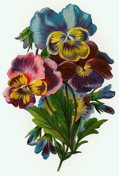 Pretty Vintage Pansies