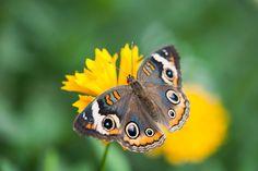 Striking butterfly!