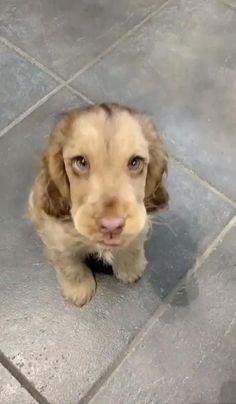 Cute Little Animals, Cute Funny Animals, Funny Cute, Funny Dogs, Cute Puppies, Cute Dogs, Dogs And Puppies, Cute Babies, Doggies