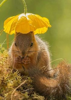 This female squirrel star of stage,and screen always makes sure she is protected from the sun's harmful rays.