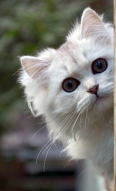 kitten....what about me?