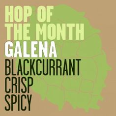 Hops of the Month: Galena  March 2015
