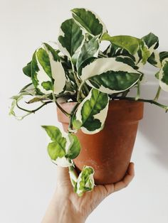 "Green thumb bluestiphotos: ""pothos fam "" How To Choose The Right Fridge & Freezer Article Body: Mode House Plants Decor, Plant Decor, Indoor Garden, Indoor Plants, Potted Plants, Planting Succulents, Planting Flowers, Plantas Indoor, Plant Aesthetic"
