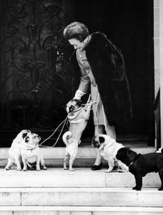 The Duke and Duchess of Windsor were #pug people. I will have this many pugs one day. One day!