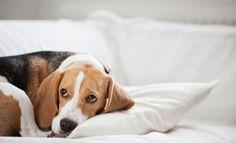 ¿Mascotas estresadas? Síntomas