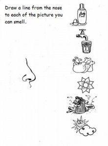 5 senses worksheet for kids (6) | Crafts and Worksheets for Preschool,Toddler and Kindergarten