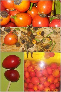 nalewka z owoców dzikiej róży Food And Drink, Vegetables, Compost, Vegetable Recipes, Veggies