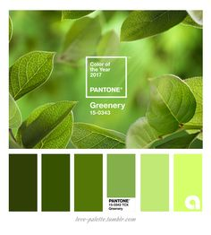 Greenery Color of the year - Pantone Pallette, Colour Pallete, Colour Schemes, Color Combos, Color Palettes, Pantone Verde, Paleta Pantone, Color Of The Year 2017 Pantone, Pantone Color