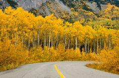 http://0.tqn.com/d/gocanada/1/0/j/6/-/-/Aspen_fall_colour.jpg