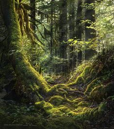 Forest light by Daniel_Metz Forest Light, Magic Forest, Wild Forest, Fantasy Forest, Deep Forest, Beautiful World, Beautiful Places, Beautiful Pictures, Beautiful Sky