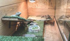 家族に無許可で飼い始めたゲイリートゲオアガマとサビグニーアガマ。すっかり今では我が家の人気者になって […] Reptiles, Decor, Decoration, Decorating, Deco