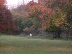a man sitting on the picnic table in the woods in Midlothian, IL..