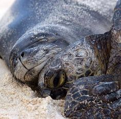 beautiful seal and a turtle cuddling