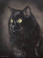 Black cat by Julyart