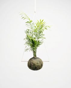 Kokedama is a traditional Japanese art form also known as a 'poor man's bonsai' or Japanese moss ball. Our Kokedama are handcrafted and made-to-order in our Amsterdam studio. Plant Crafts, Plant Projects, Indoor Garden, Indoor Plants, Floating Plants, Lower Lights, Tropical Landscaping, Flower Planters, Types Of Plants