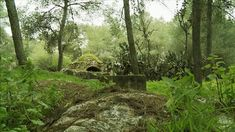 village forest - Google Search Country Roads, Google Search, Plants, Plant, Planets