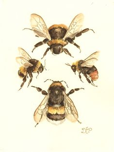 The Flight of the Bumblebee Print 810 nature study naturalist scientific art illustration painting honey bee victorian painting Art And Illustration, Botanical Illustration, Illustrations, Bumble Bee Illustration, Victorian Illustration, Botanical Drawings, Victorian Paintings, Victorian Artwork, Vintage Paintings