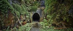 Abandoned - Old Helensburg Tunnel from the old station, feels like this is what it would be like if nature took over the planet by Mark Dunham