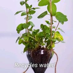 - Pflanzen - Best Picture For growing indoors For Your Taste You are looking for something, and it is going to - Water Plants Indoor, Indoor Garden, Outdoor Gardens, Aquatic Plants, Plant In Water, Indoor Hanging Plants, Indoor Plant Decor, Indoor Plants Names, Indoor Plants Low Light