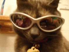 Scroll2Lol.com - My cat wears sunglasses, take her to the front page!