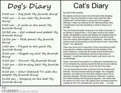 Dog Vs. Cat Dairy. Makes me laugh every time!:D