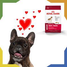 Consiéntelos con Royal Canin. ¡Lo amarán! Pedirlo es muy sencillo, conoce nuestra oferta en http://petshomeandmore.com/collections/alimento y  llama al 01 800 001 PETS y menciona tu selección.