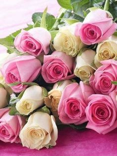 Simply Fairtrade Pink and White Roses Most Popular Flowers, Amazing Flowers, Beautiful Roses, White Roses, Pink Roses, Pink Flowers, Flower Background Wallpaper, Flower Backgrounds, Beautiful Flower Arrangements
