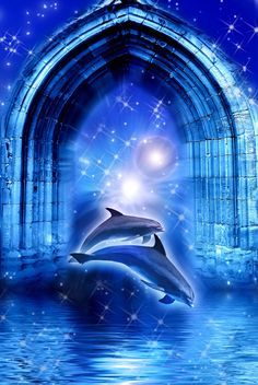 Save Our Dolphins! Help Stop Mass Dolphin Slaughter in Japan ...