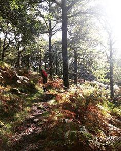 Following the #boyfriend through the #trees #colours #walk #wander #Autumn #woodland #fern #England #getoutside #goexplore #weekendings 🍂🍁