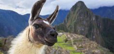Here are some of our best tips for exploring Cusco, Peru, as well as other exciting places to visit in the Sacred Valley on your way to Machu Picchu.