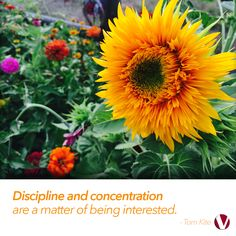 School is back in session, which means the fall season is upon us. How will you do all the things you need to do before the cold hits? Click the flower to read this week's letter: Concentration Formula.